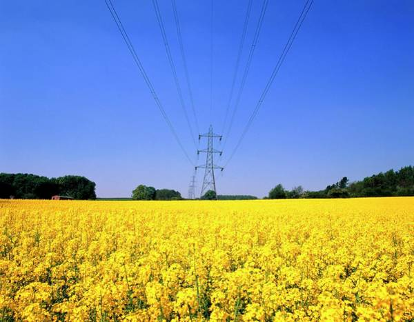Electrical Field Wall Art - Photograph - Pylons by David Parker/science Photo Library