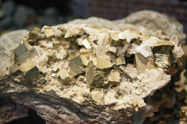 Cubic Wall Art - Photograph - Pyrite Crystals. by Mark Williamson/science Photo Library