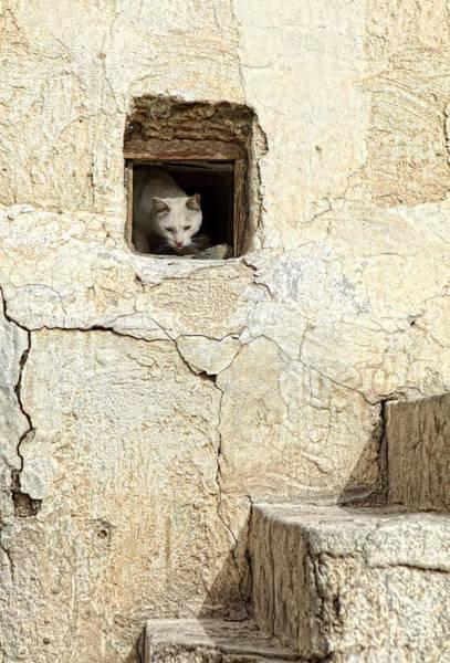 Crumble Photograph - Qatari Alley Cat by Paul Cowan