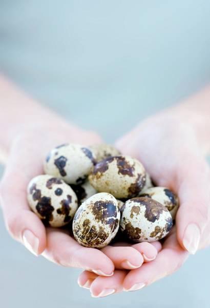 Egg Cup Photograph - Quail Eggs by Ian Hooton/science Photo Library