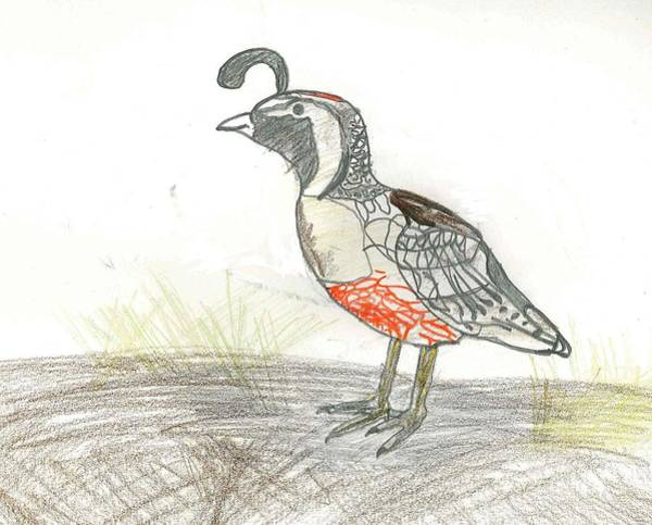 Drawing - Quail Bird by Ethan Chaupiz