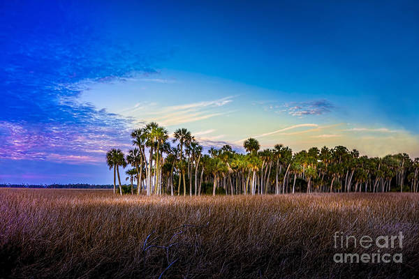 Palmetto Photograph - Quailty Time by Marvin Spates