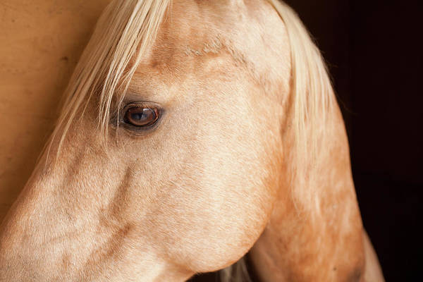 Ranch Photograph - Quarter Horse At Italian Ranch In by Caroyl La Barge