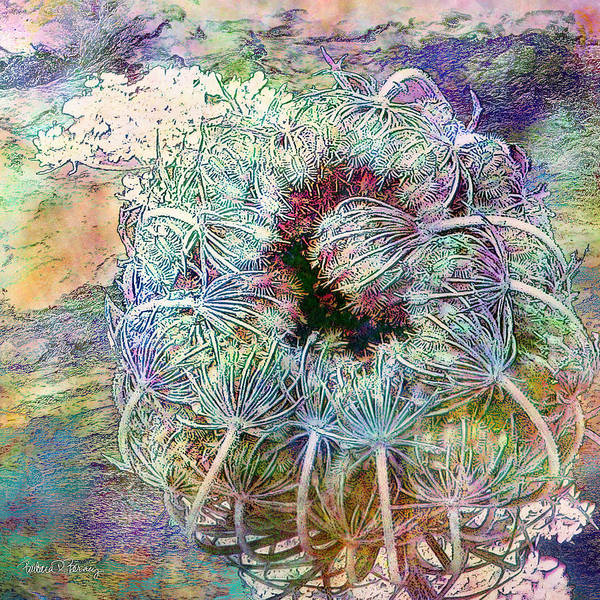 Digital Art - Queen Anne's Lace by Barbara Berney
