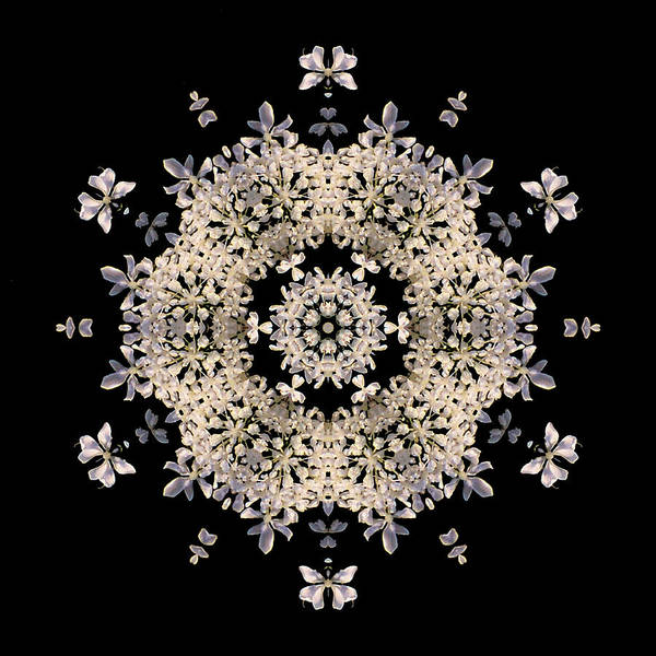 Photograph - Queen Anne's Lace Flower Mandala by David J Bookbinder