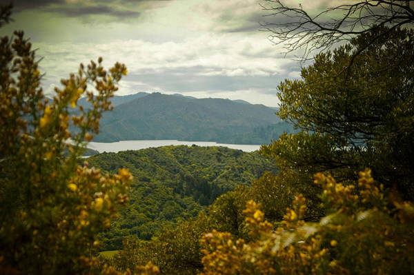 Queen Charlotte Sound Wall Art - Photograph - Queen Charlotte Sound by Mark Llewellyn