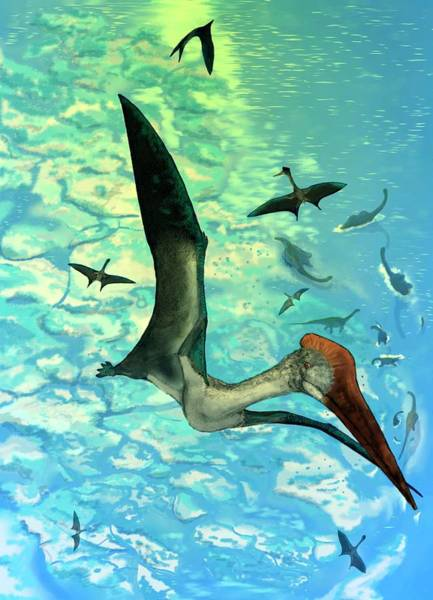 Big 5 Photograph - Quetzalcoatlus by Mark P. Witton/science Photo Library