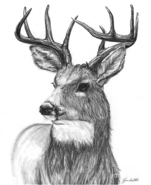 Antlers Drawing - Quick Steps In The Woods by J Ferwerda