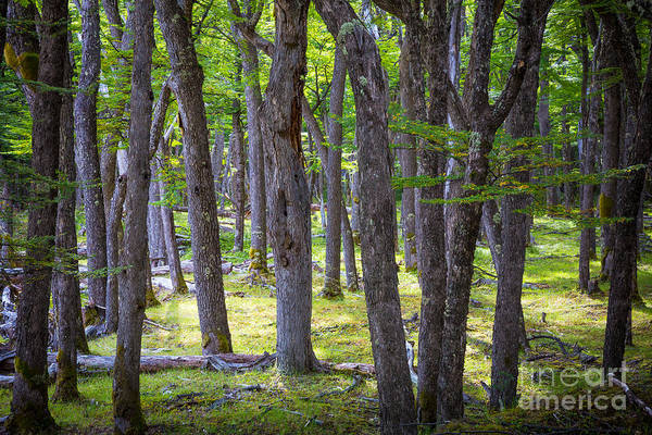 Bark Wall Art - Photograph - Quiet Forest by Inge Johnsson