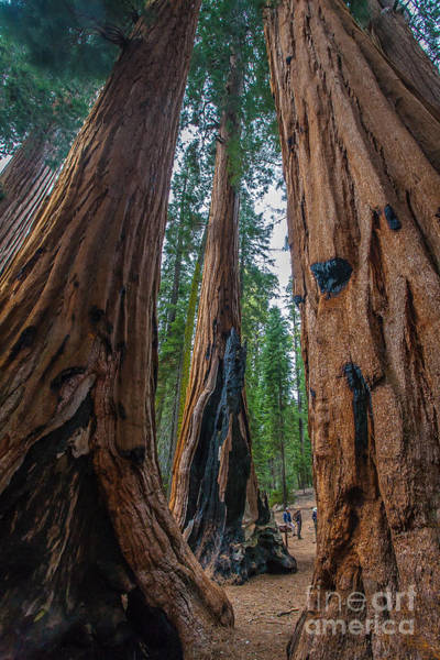 Photograph - Quiet Giants by Charles Garcia