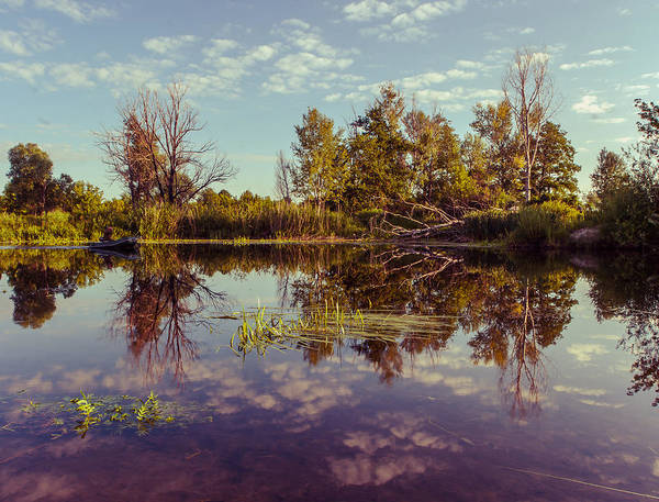 Photograph - Quiet Morning by Dmytro Korol