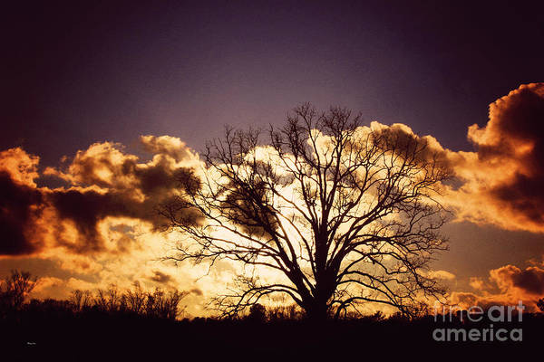 Wall Art - Photograph - Quiet Places  by Jinx Farmer