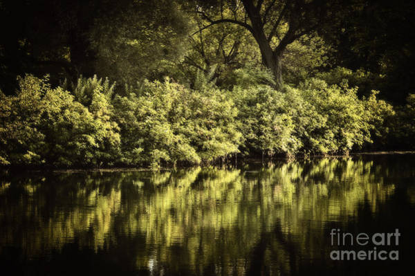 Wall Art - Photograph - Quiet Reflections by Elena Elisseeva