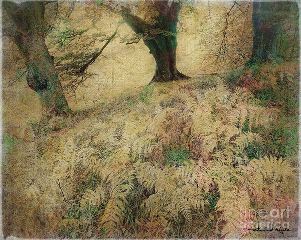 Photograph - Quietude Of The Forest by Edmund Nagele