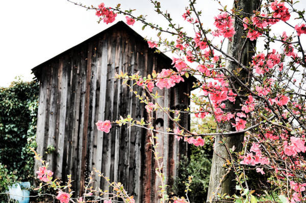 Photograph - Quince Dreams by Spencer Hughes