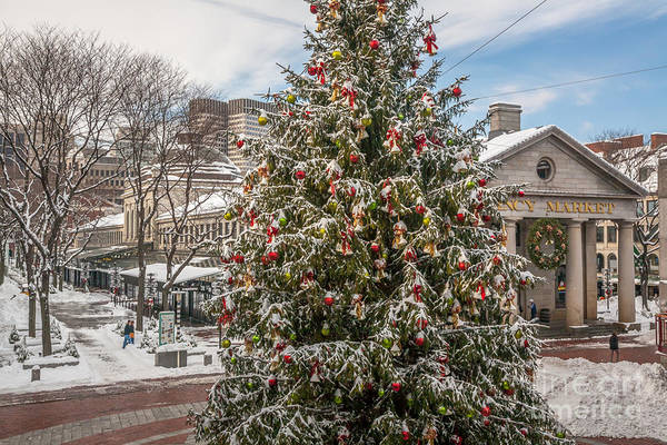 Photograph - Quincy Market Christmas Tree by Susan Cole Kelly