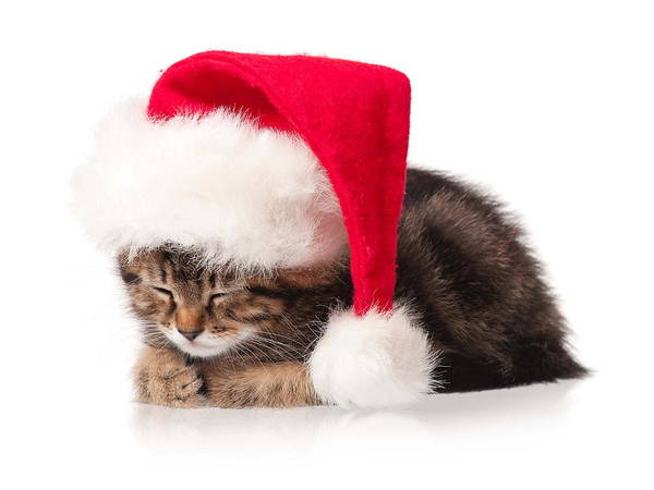 Photograph - Cute Christmas Cat by Doc Braham
