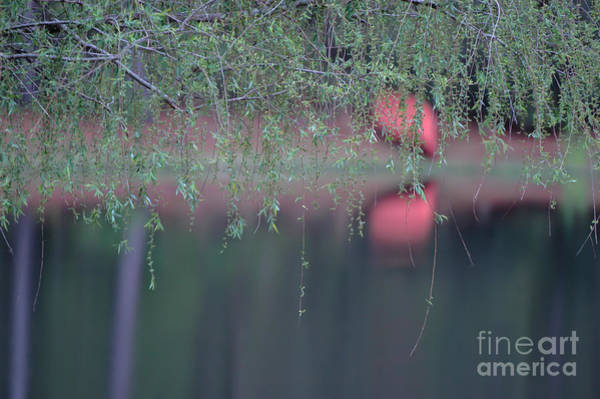 Photograph - Quite Reflections by Dale Powell
