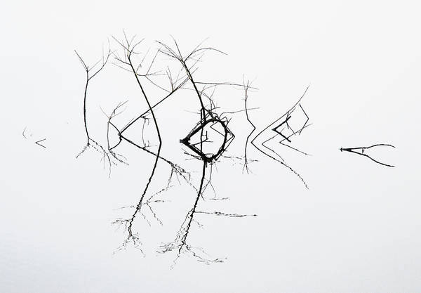 Monotone Photograph - Quivering by Bernie Delaney