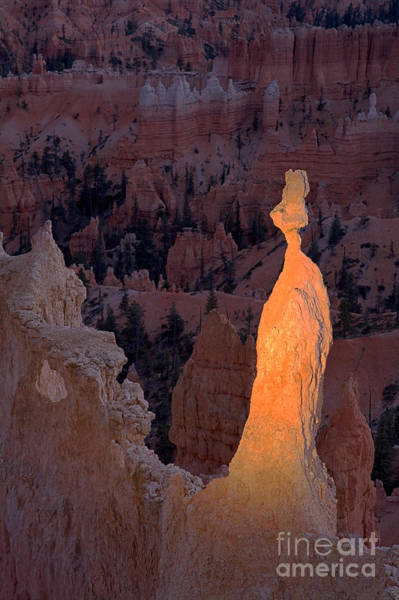 Rabbit Sunset Point Bryce Canyon National Park Art Print