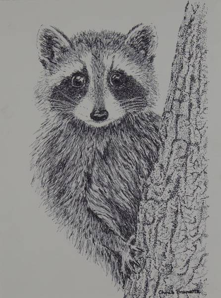 Nocturnal Drawing - Raccoon by Christine Brunette
