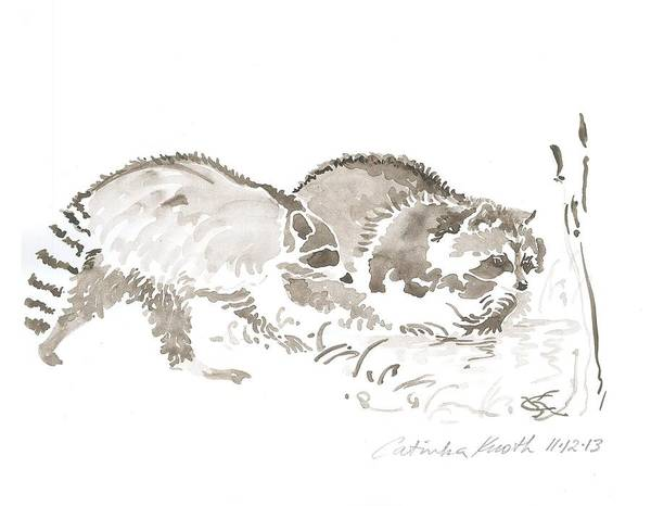 Painting - Raccoon Rascals  Clean Food Pond Watercolor  Drawing by Catinka Knoth