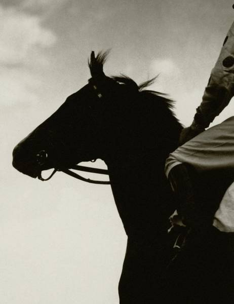 Animal Photograph - Race Horse Gallant Fox by Edward Steichen