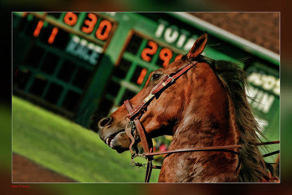 Photograph - Race Horse Head Shot by Blake Richards