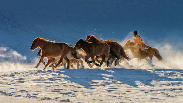 Herd Photograph - Racing In Snow by Hua Zhu