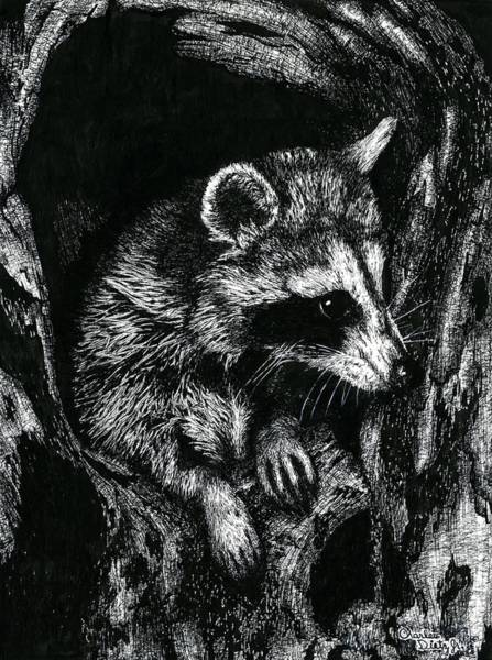 Furry Drawing - Racoon by Charles L Dietz Jr
