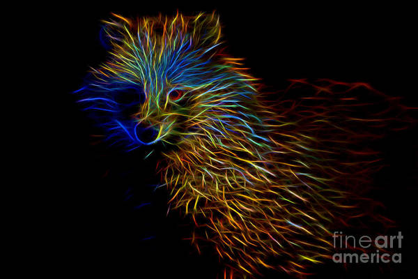 Digital Art - Racoon Dog Abstract by Ray Shiu