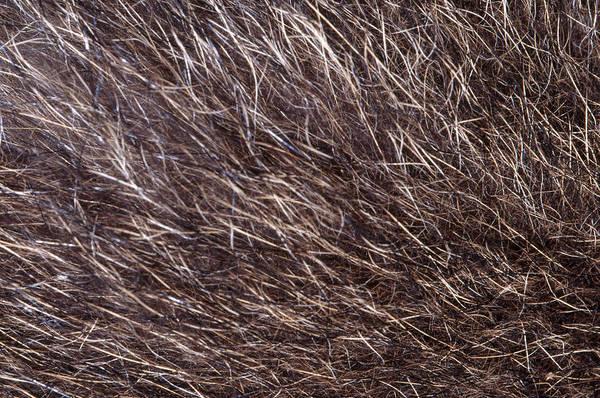 Wall Art - Photograph - Racoon Fur by Robert J. Erwin