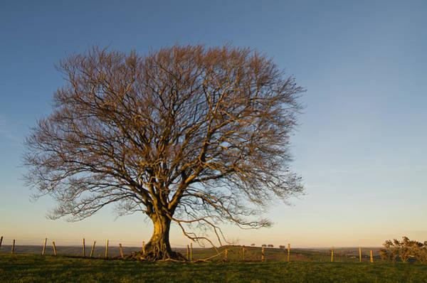 Photograph - Raddon Hill Top Tree by Pete Hemington