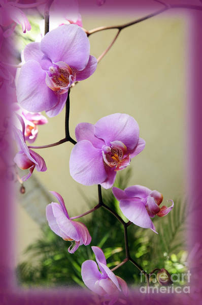 Photograph - Radiant Orchid Cascade by Andee Design