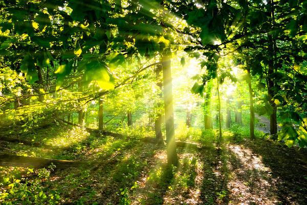 Photograph - Radiant Sunlight Through The Trees by Lars Lentz