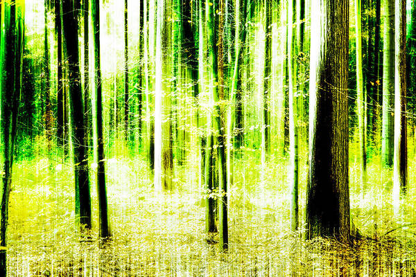 Photograph - Radiation Forest by Andy Bitterer