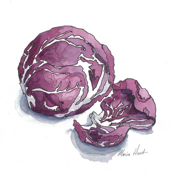 Wall Art - Painting -  Refined Radicchio  by Maria Hunt