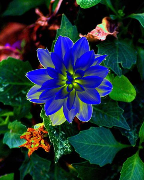 Photograph - Radient Flower Energy by Ben Upham III