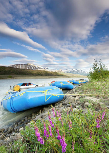 Glacier Bay Photograph - Rafts And Wildflowers Along The Alsek by Josh Miller Photography