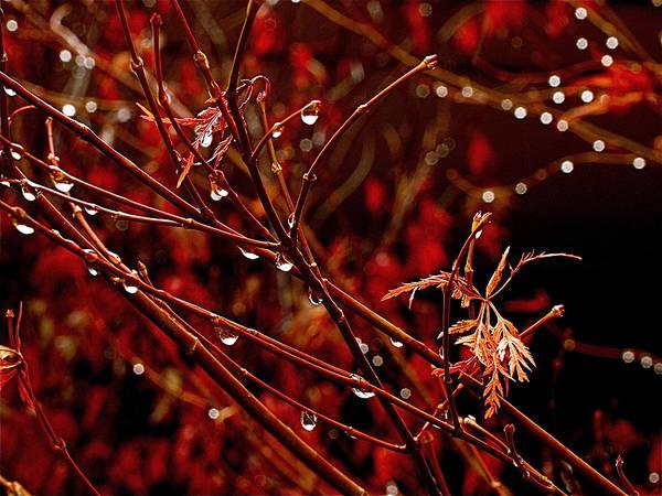 Photograph - Rain Dance by Rona Black
