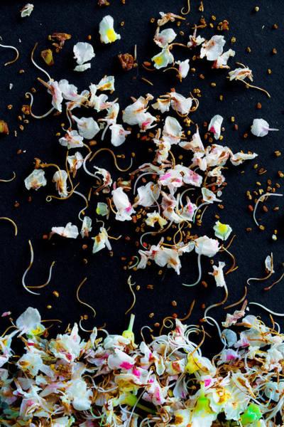 Photograph - Rain Of Petals by Edgar Laureano