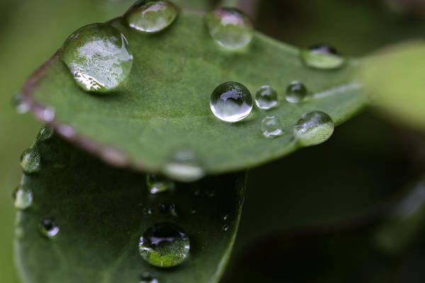 Photograph - Rain Sphere by Sara Hudock