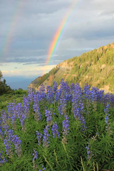 Alpine Meadows Photograph - Rainbow Above Lupine Wildflowers On Mount Timpanogos. by Johnny Adolphson