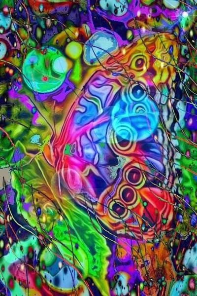 Digital Art - Rainbow Butterfly by Karen Buford