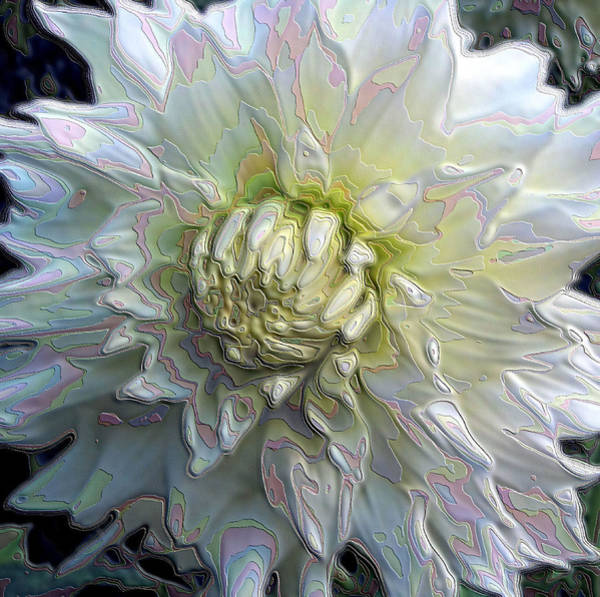 Photograph - Rainbow Dahlia by Lora Fisher
