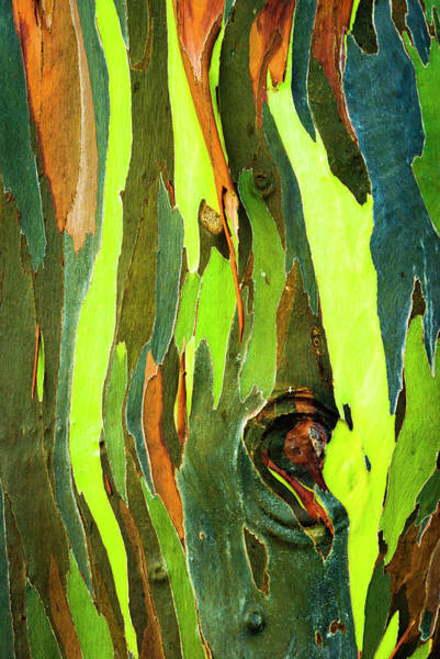 Wall Art - Photograph - Rainbow Eucalyptus Bark, Mindanao Gum by Russ Bishop