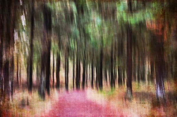 Photograph - Rainbow Forest by Randi Grace Nilsberg
