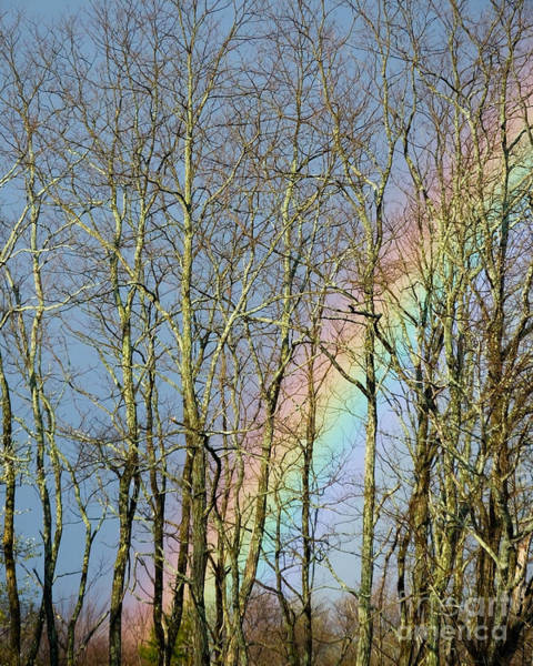 Photograph - Rainbow Hiding Behind The Trees by Kristen Fox