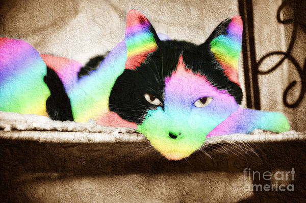 Mixed Media - Rainbow Kitty Abstract by Andee Design