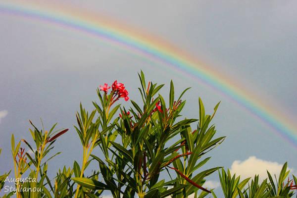 Photograph - Rainbow Over Flower by Augusta Stylianou